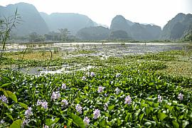 Photo Baie d'Halong terrestre • Tam Coc